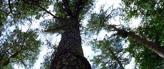 finalshottrees